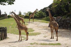 平川動物公園1