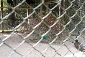 平川動物公園4