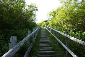 コッタロ湿原展望台階段