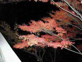 京都夜間1