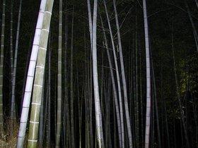 京都夜間4